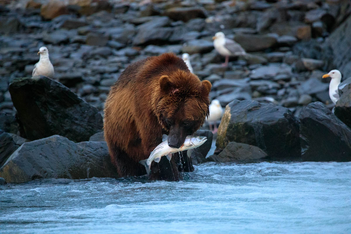 Bear Safety in Valdez, Alaska