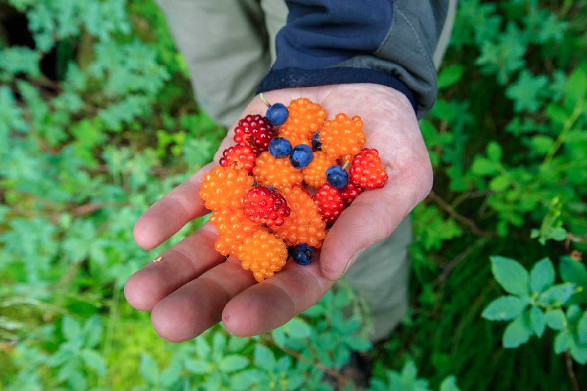 Berry Picking in Valdez, Alaska
